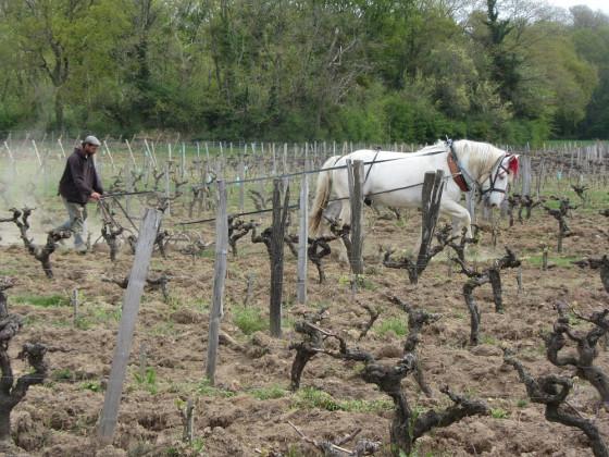 Photo de Domaine Le Batossay, membre de Bout à Bout, réseau de réemploi des bouteilles en verre en Pays de la Loire