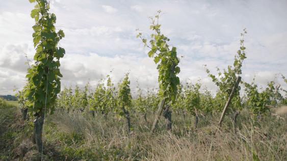 Photo de Domaine de la Renière, membre de Bout à Bout, réseau de réemploi des bouteilles en verre en Pays de la Loire